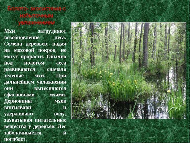 Мхи затрудняют возобновление леса. Семена деревьев, падая на моховой покров,...