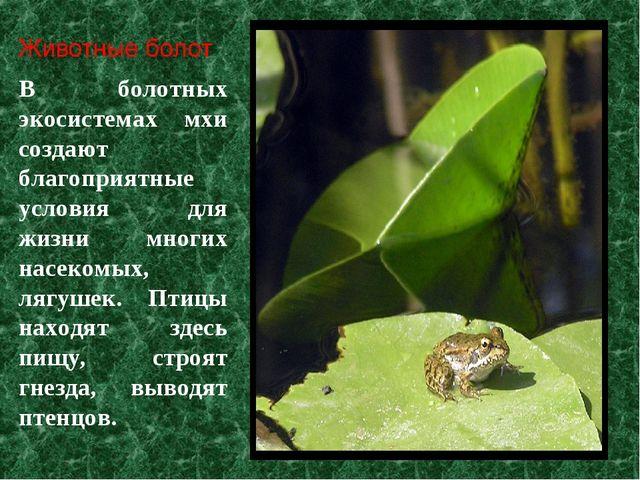 В болотных экосистемах мхи создают благоприятные условия для жизни многих нас...