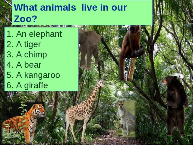 1. An elephant 2. A tiger 3. A chimp 4. A bear 5. A kangaroo 6. A giraffe Wha...