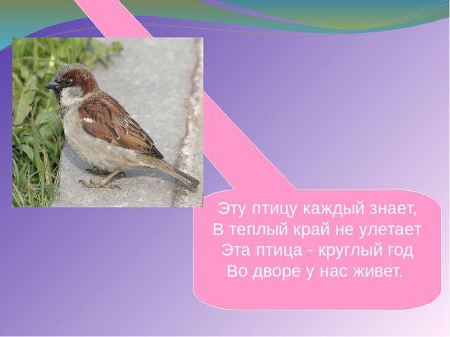 Эту птицу каждый знает, В теплый край не улетает Эта птица - круглый год Во д...