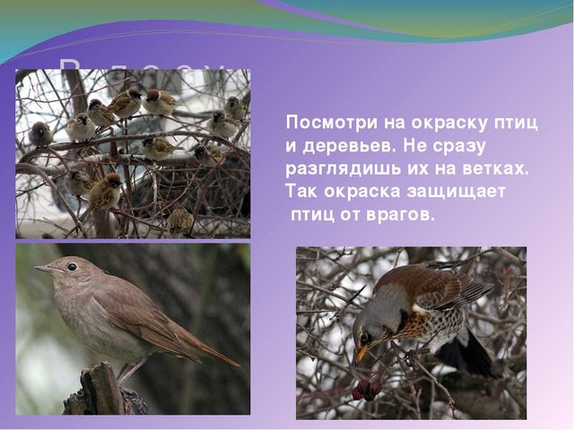 В л е с у Посмотри на окраску птиц и деревьев. Не сразу разглядишь их на вет...