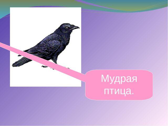 Мудрая птица. .