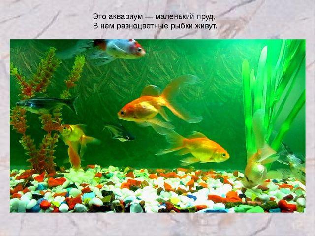 Это аквариум — маленький пруд, В нем разноцветные рыбки живут.