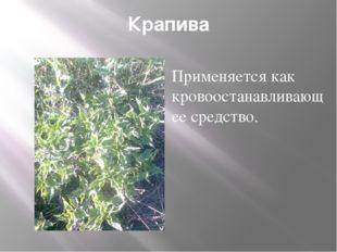 Крапива Применяется как кровоостанавливающее средство.