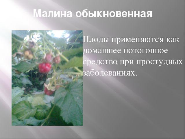 Малина обыкновенная Плоды применяются как домашнее потогонное средство при пр...