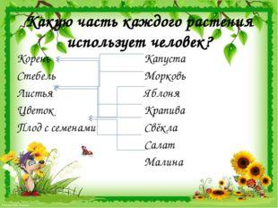 Какую часть каждого растения использует человек? Корень Стебель Листья Цветок
