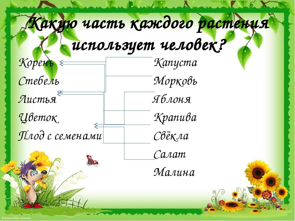 Какую часть каждого растения использует человек? Корень Стебель Листья Цветок...