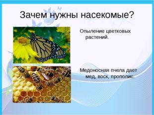 Зачем нужны насекомые? Опыление цветковых растений. Медоносная пчела дает мед
