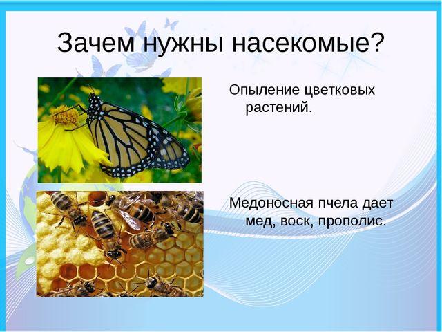 Зачем нужны насекомые? Опыление цветковых растений. Медоносная пчела дает мед...