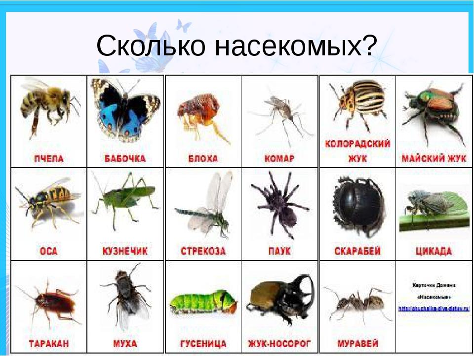 Сколько насекомых?