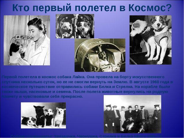 Кто первый полетел в Космос? Первой полетела в космос собака Лайка. Она прове...