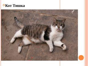 Кот Тишка