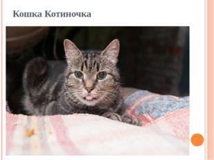 Кошка Котиночка