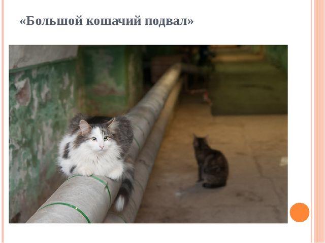 «Большой кошачий подвал»
