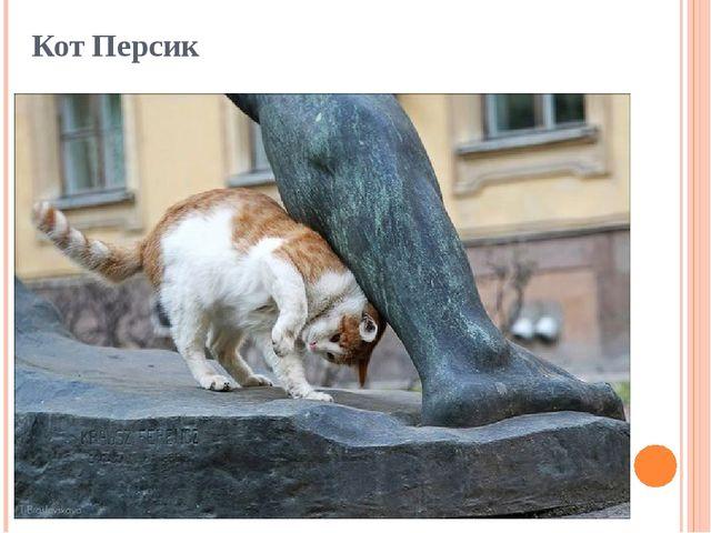 Кот Персик