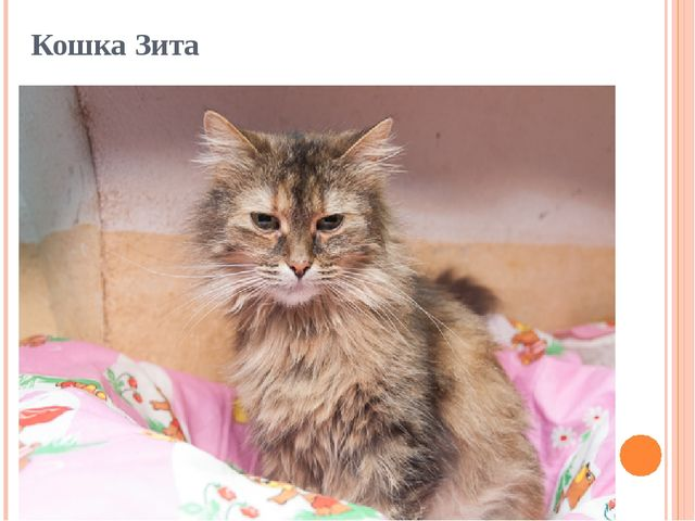 Кошка Зита