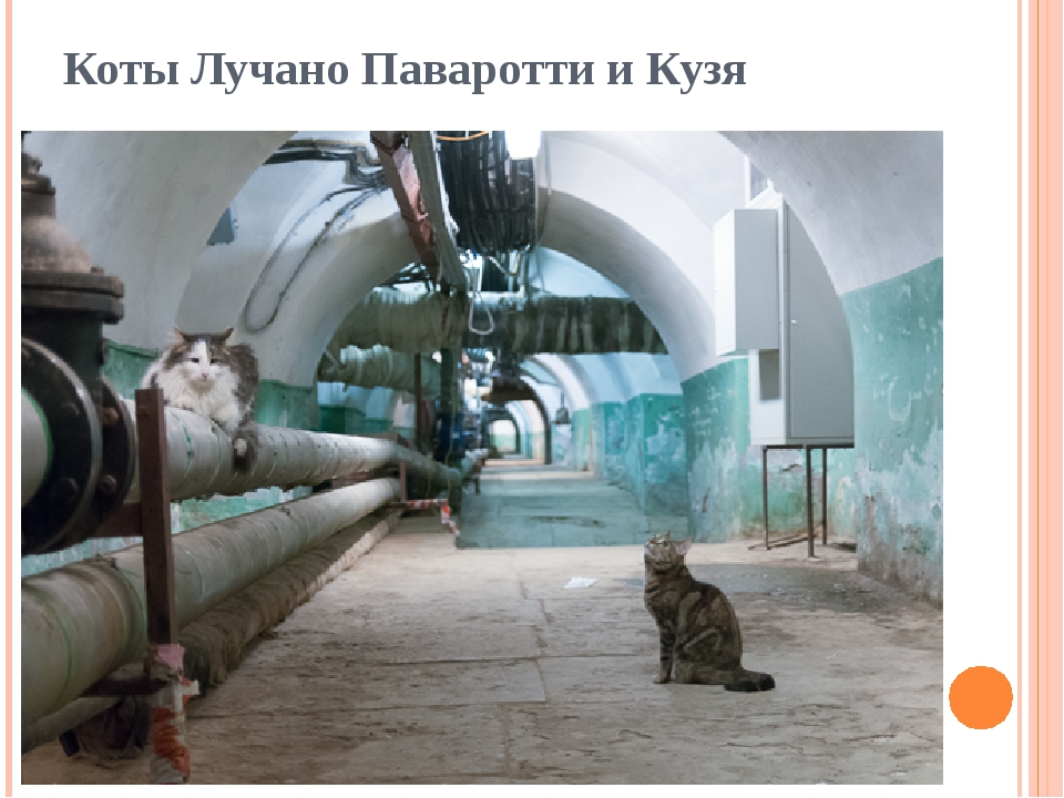 Коты Лучано Паваротти и Кузя