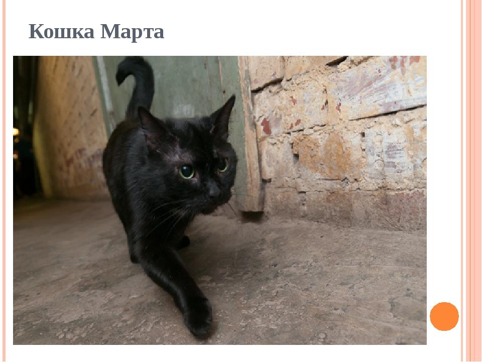 Кошка Марта