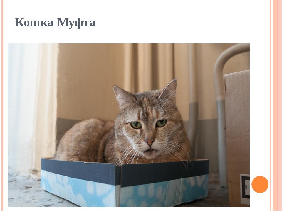 Кошка Муфта