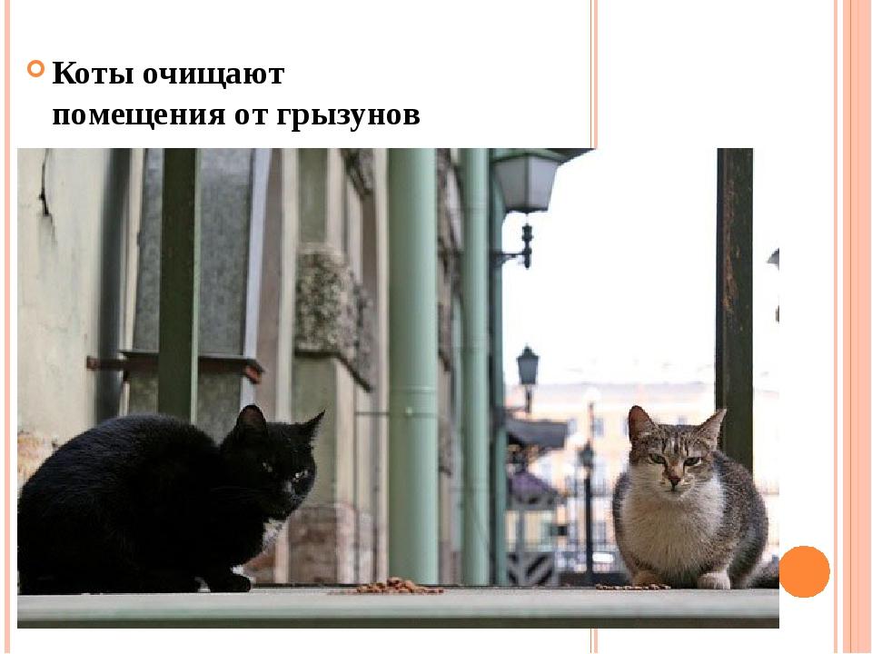Коты очищают помещения от грызунов