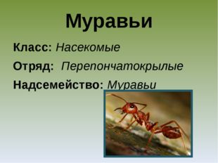 Муравьи Класс: Насекомые Отряд: Перепончатокрылые Надсемейство: Муравьи