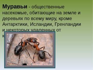 Муравьи - общественные насекомые, обитающие на земле и деревьях по всему миру