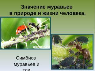 Значение муравьев в природе и жизни человека. Симбиоз муравьев и тли
