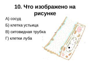 10. Что изображено на рисунке А) сосуд Б) клетка устьица В) ситовидная трубка