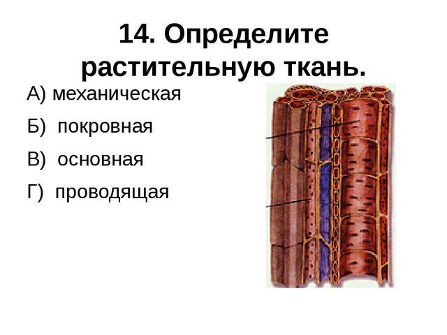 14. Определите растительную ткань. А) механическая Б) покровная В) основная Г...