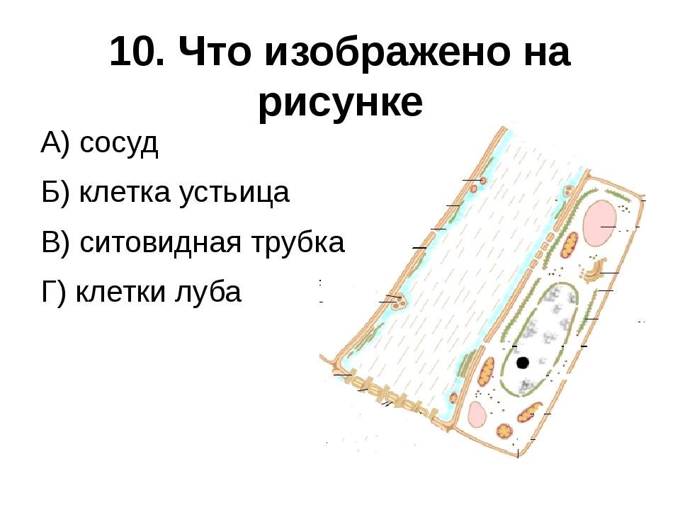 10. Что изображено на рисунке А) сосуд Б) клетка устьица В) ситовидная трубка...