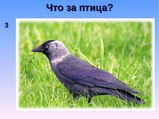 Что за птица? 3