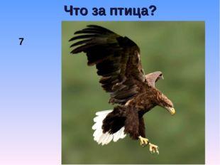Что за птица? 7