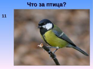 Что за птица? 11