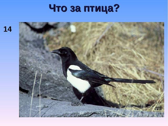 Что за птица? 14