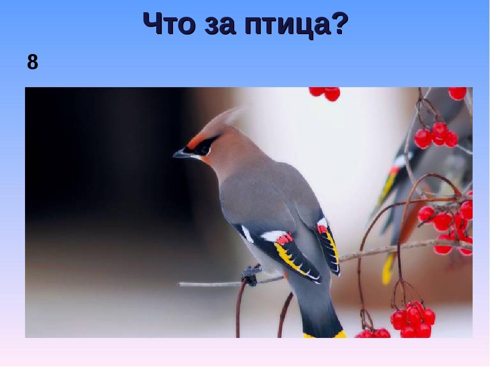 Что за птица? 8