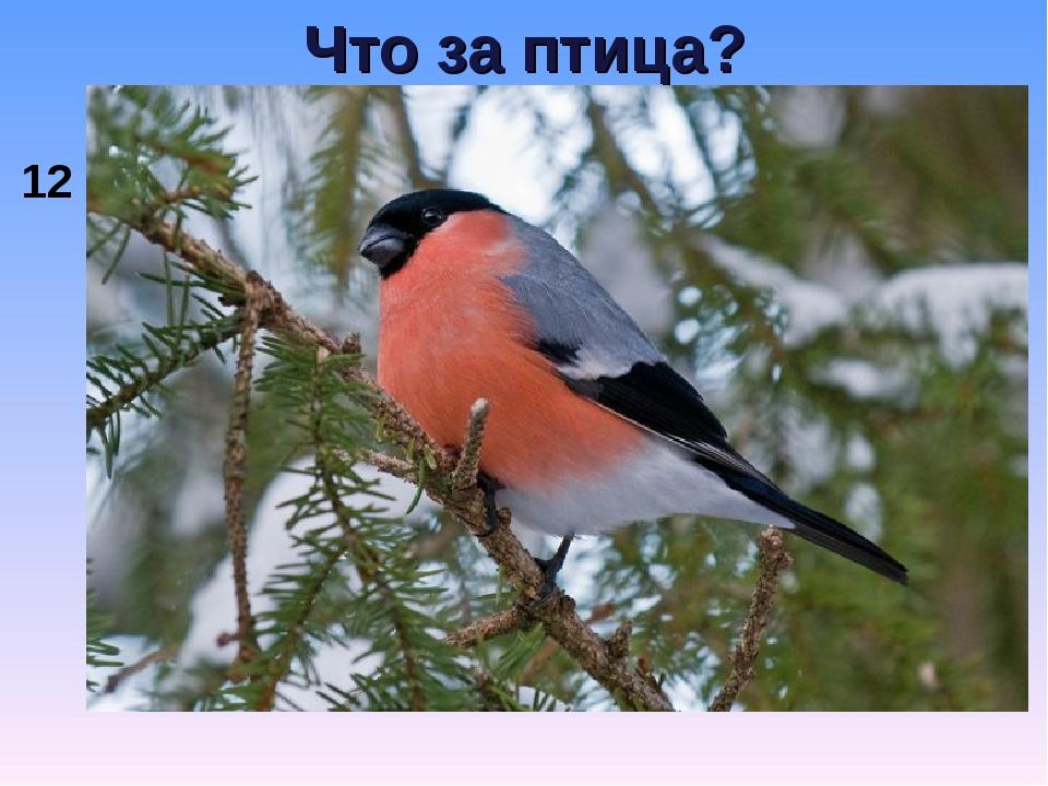 Что за птица? 12