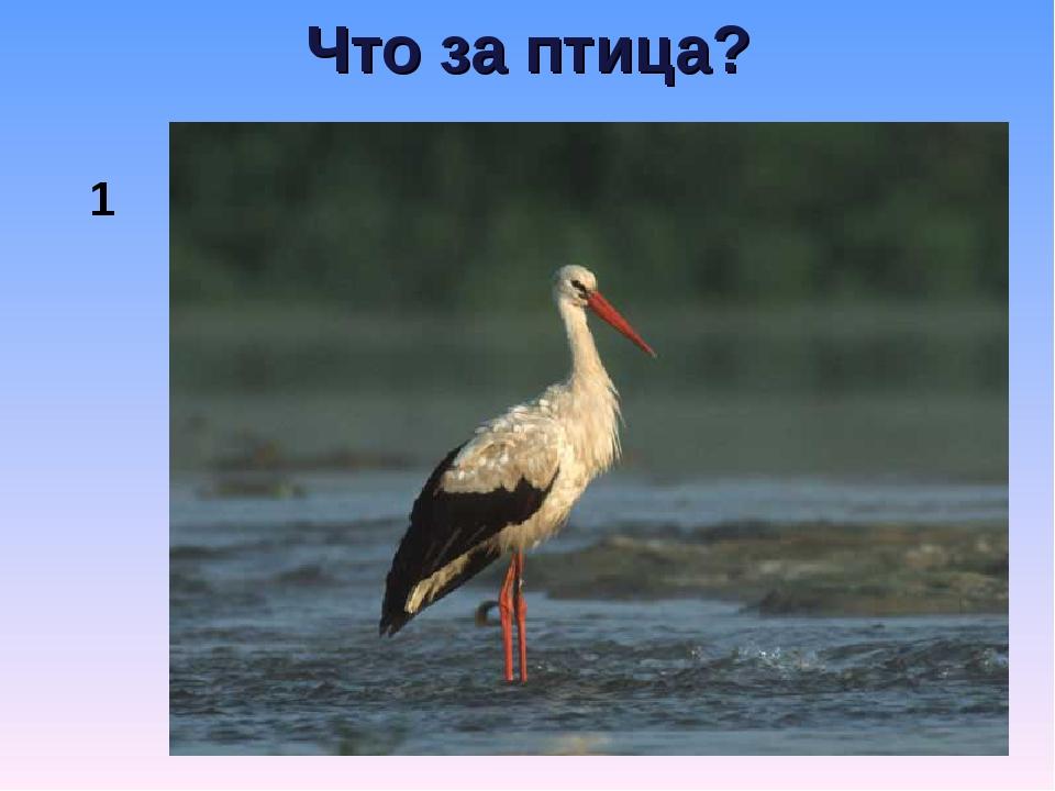 Что за птица? 1