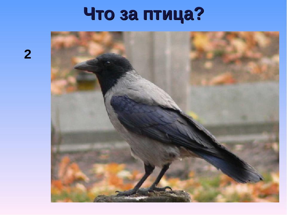 Что за птица? 2