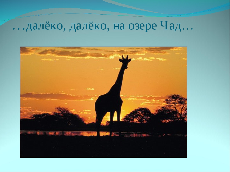 …далёко, далёко, на озере Чад…