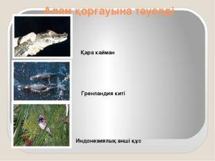 Адам қорғауына тәуелді Қара кайман Гренландия киті Индонезиялық әнші құс