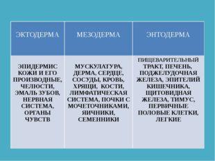 ЭКТОДЕРМА МЕЗОДЕРМА ЭНТОДЕРМА ЭПИДЕРМИСКОЖИ И ЕГО ПРОИЗВОДНЫЕ, ЧЕЛЮСТИ, ЭМАЛ