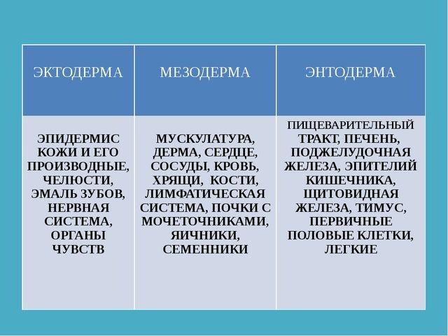 ЭКТОДЕРМА МЕЗОДЕРМА ЭНТОДЕРМА ЭПИДЕРМИСКОЖИ И ЕГО ПРОИЗВОДНЫЕ, ЧЕЛЮСТИ, ЭМАЛ...