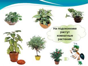 На подоконнике растут комнатные растения.