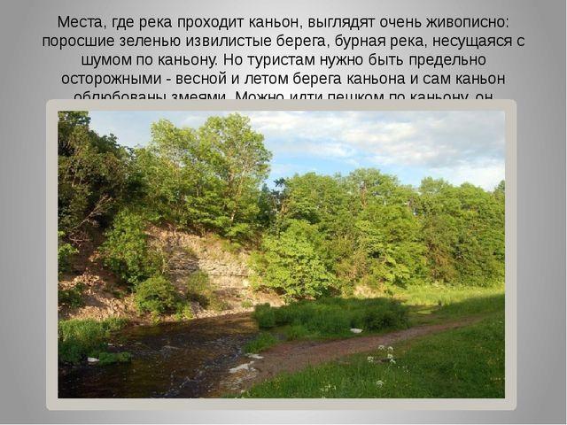 Места, где река проходит каньон, выглядят очень живописно: поросшие зеленью и...
