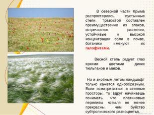 В северной части Крыма распростерлись пустынные степи. Травостой составлен п