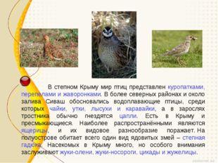 В степном Крыму мир птиц представлен куропатками, перепелами и жаворонками.