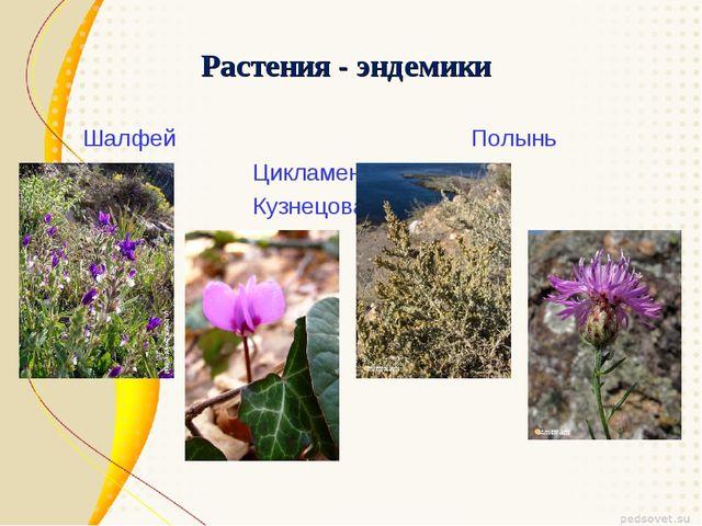 Растения - эндемики Шалфей Полынь Цикламен Кузнецова Василек