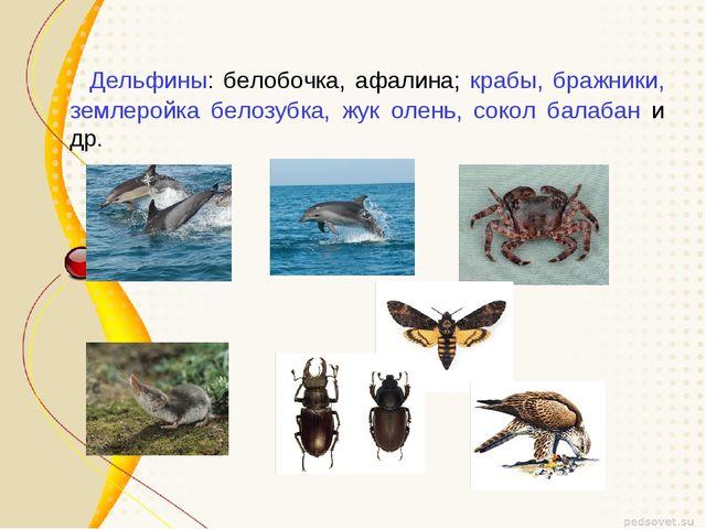 Дельфины: белобочка, афалина; крабы, бражники, землеройка белозубка, жук оле...