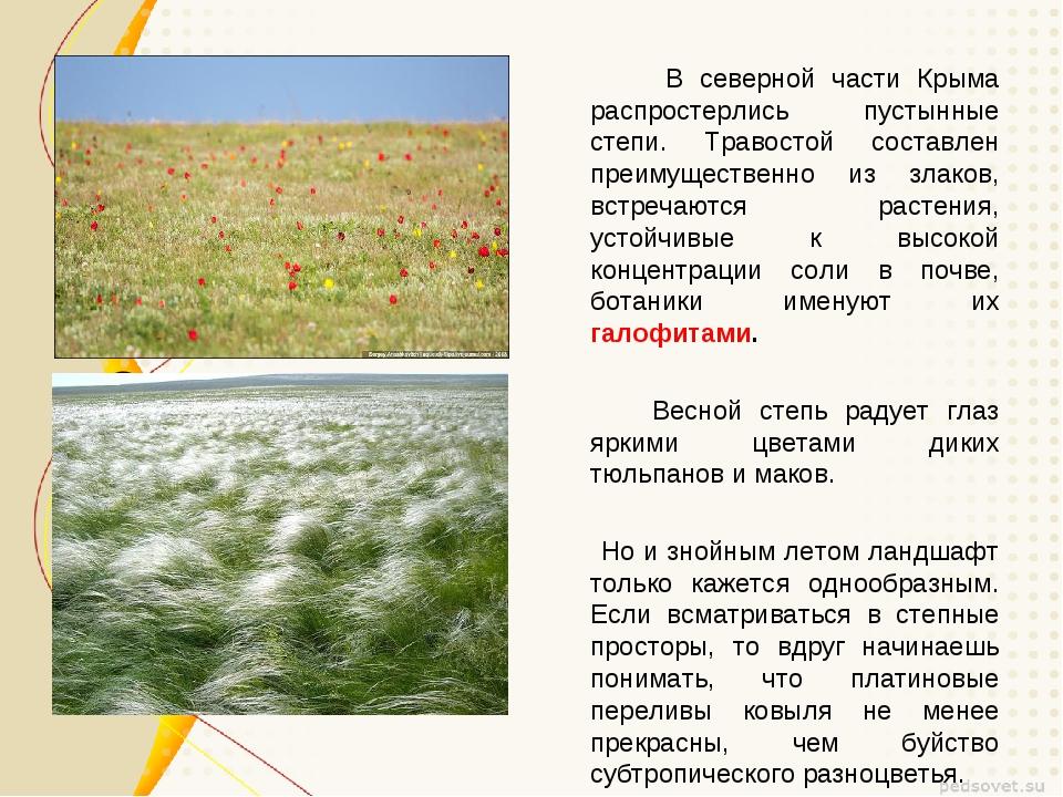 В северной части Крыма распростерлись пустынные степи. Травостой составлен п...