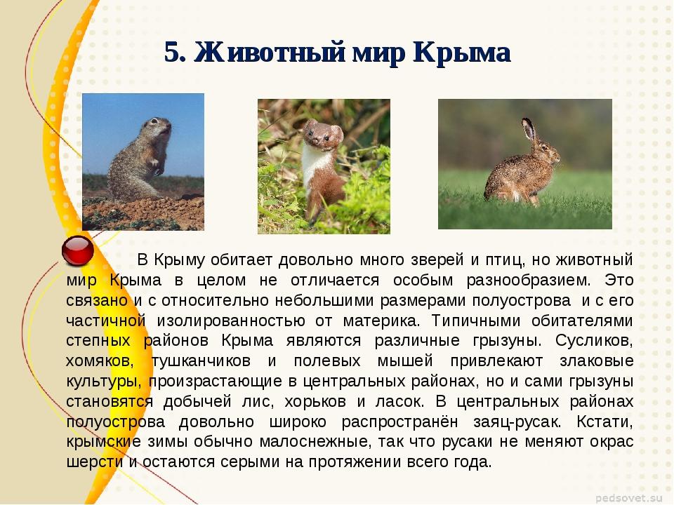 5. Животный мир Крыма В Крыму обитает довольно много зверей и птиц, но животн...